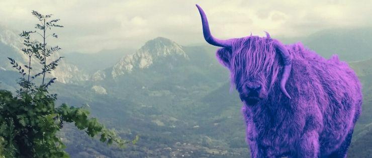 vaca lila t30 branding